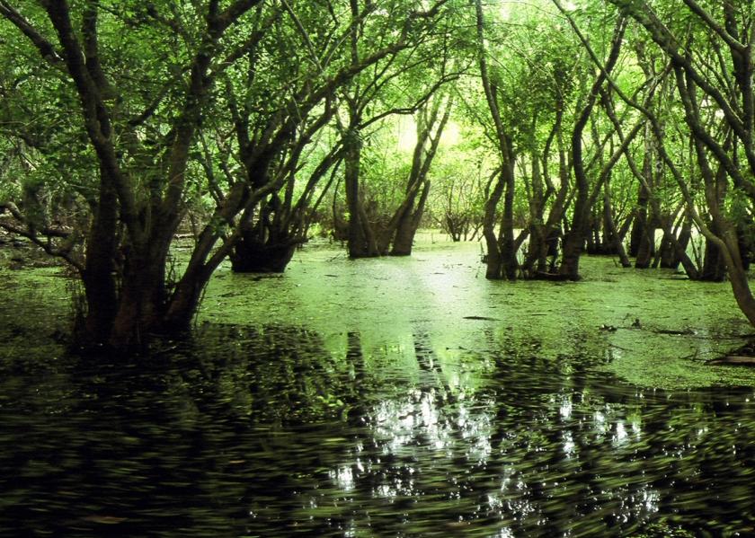 161024_sci_swamp-crop-promo-xlarge2