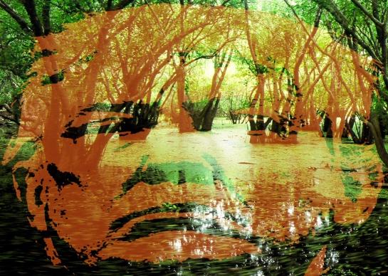 swamp5.jpg